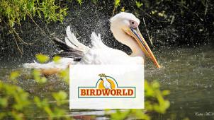 10% Off Food with Membership at Birdworld