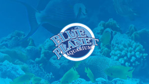 10% Off Online Tickets at Blue Planet Aquarium