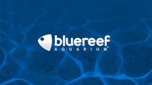 Blue reef aquarium vouchers discount codes get 20 off for Discount aquarium fish and reef