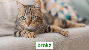 Bis zu 50% Rabatt: Sonderangebote - Futter, Zubehör und mehr für Hund und Katze bei brekz.de