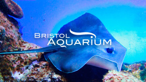 10% Off Online Tickets at Bristol Aquarium