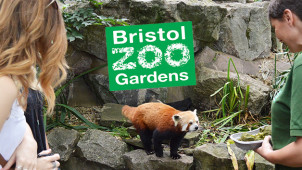 33% Off Entry at Bristol Zoo Gardens