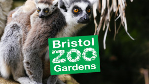 33% Off Zoo Entry at Bristol Zoo Gardens