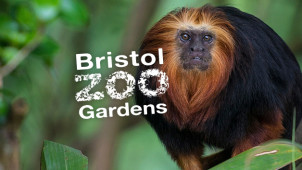 Up to 29% Off Tickets at Bristol Zoo Gardens