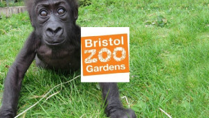 Up to 29% Off Online Tickets at Bristol Zoo Gardens