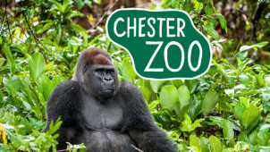 10% Off Online Bookings at Chester Zoo