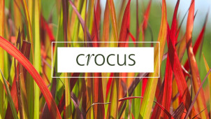 Up to 30% Off Orders in the Winter Sale at Crocus