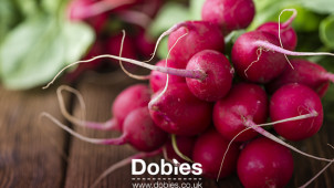 Enjoy Savings of Up to 80% Plus Free Delivery with Newsletter Sign-ups at Dobies