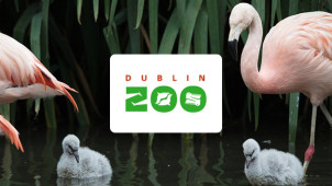 10% Off Tickets for SSE Reward Members at Dublin Zoo
