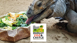 Family Tickets from £32.40 at Dudley Zoological Gardens