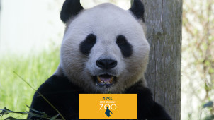 Shop Keeper Experience Vouchers from £40 at Edinburgh Zoo