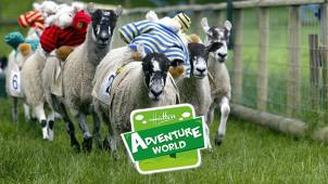 25% Off Tickets at Hatton Adventure World
