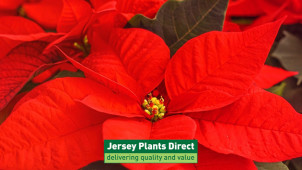Free Delivery on Orders Over £40 at Jersey Plants Direct