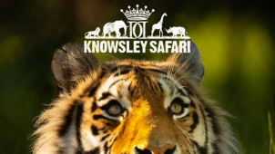 35% Off Entry at Knowsley Safari Park