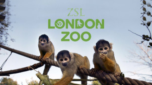 Family Tickets from £76 at London Zoo