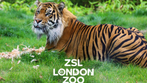 50% Off Selected Animal-Themed Merchandise at London Zoo