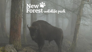 Family Annual Passes from £150 at New Forest Wildlife Park