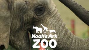 10% Off Online Bookings at Noah's Ark Zoo Farm