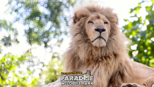 6% Off Online Bookings at Paradise Wildlife Park