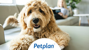£30 Gift Card with Dog Insurance Purchases at Pet Plan