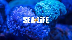 Topseller: bis zu 40% sparen auf Oberhausen Tickets von Sea Life
