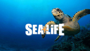 Admission Ticket from £18.86 at SEA LIFE Centres & Sanctuaries Manchester