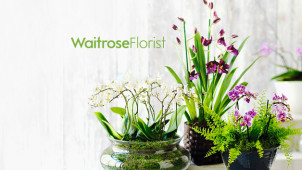 Spring Flowers and Plants from £20 at Waitrose Flowers