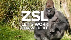 Adult Tickets from £23 at Whipsnade Zoo