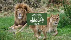 £1 Off Online Bookings at Yorkshire Wildlife Park