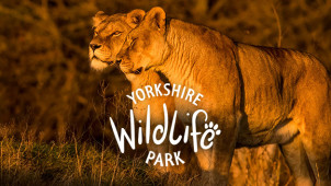 20% Off Food and Drink Voucher with Online Bookings at Yorkshire Wildlife Park