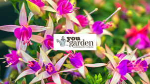 10% Off Your First Order at YouGarden
