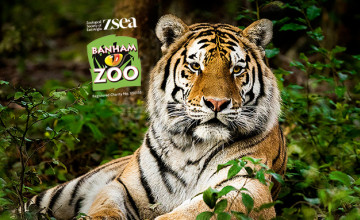 20% Off Tickets at Banham Zoo