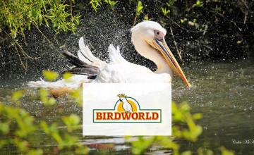 20% Off Tickets at Birdworld