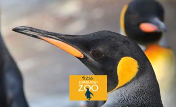 20% Off Tickets at Edinburgh Zoo