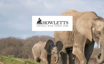 Save 15% when you Book Tickets online at Howletts Zoo