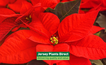 You Can Request a Free Gardening Direct Catalogue at Jersey Plants Direct
