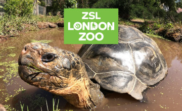 20% Off Membership with Direct Debit Payments | London Zoo Promo