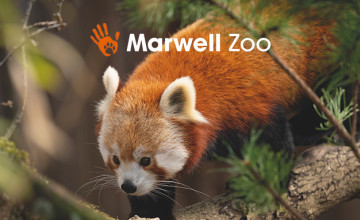 30% Off Tickets at Marwell Zoo