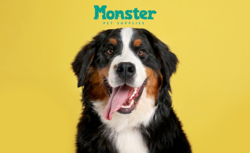 Up to 40% Discounts on Selected Cat Food at Monster Pet Supplies