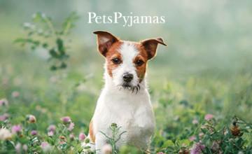 2021 UK Getaways from £30 per Night at PetsPyjamas