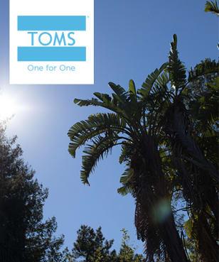 TOMS - 10% Rabatt