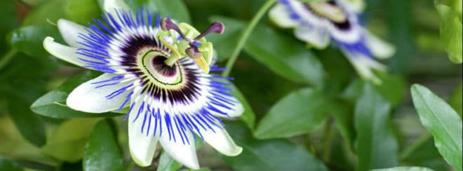 Gardening Express blue flower