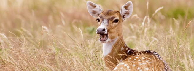 Knowsley Safari adventure