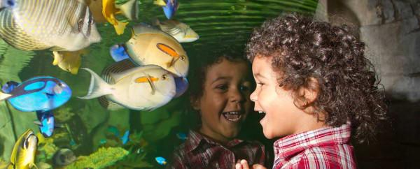 Blue Planet Aquarium vouchers