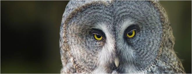 owls whitehouse farm