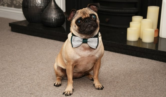 Pet Bow Tie Groupon